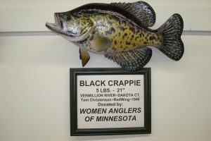 mounted black crappie fish