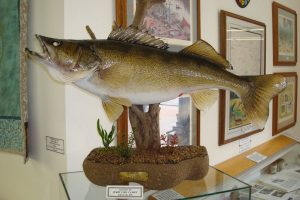 fish mounted with plants and wood