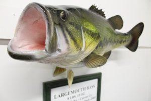 Mounted Large Mounth Bass