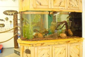 Fish tank in the Minnesota Fishing Museum