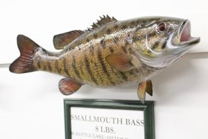 Mounted Smallmouth Bass